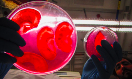 WE'RE ANOTHER STEP CLOSER TO GROWING REPLACEMENT BODY ORGANS